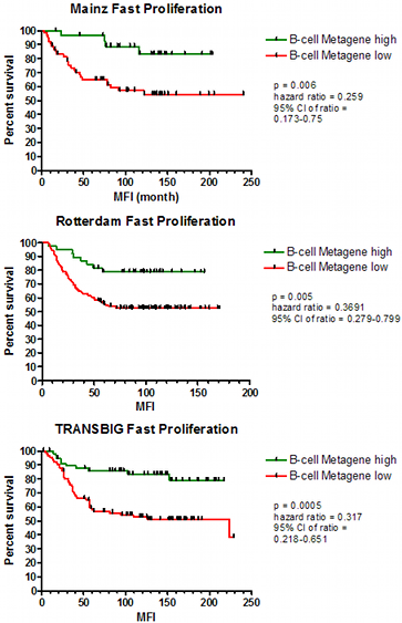 Fig. 3: The B-cell metagene is associated with prognosis in node-negative breast cancer patients. The aim of this study was to validate the hypothesis that B-cell infiltration into breast cancer tissue antagonises formation of metastasis. The applied clinical cohort contains a relatively high number of patients (n=766) and consists of three subcohorts recruited from different hospitals (Mainz, n=200; Rotterdam, n=286; Transbig, n=280). This gives us the opportunity to study whether similar results can be obtained in three independent subcohorts. In the case of the B-cell metagene, very similar results were obtained in all three subcohorts (Schmidt et al., 2008; 2009).