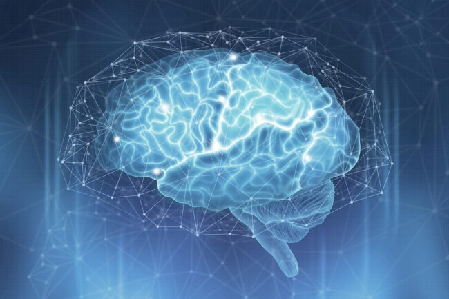 Vektorisiertes Gehirn